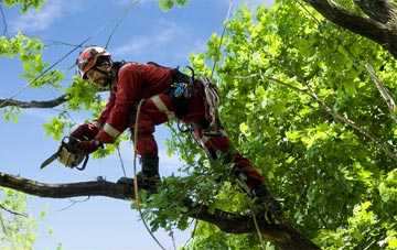 find trusted rated Somerset tree surgeons