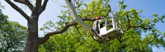 Somerset tree surgery services