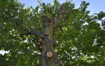 what is Somerset tree surgery?